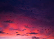 Fine red sunset and pack of crows Stock Images