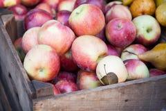 Fine ripe apples Stock Photography