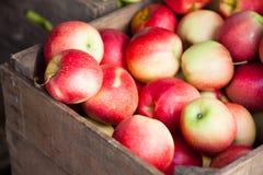 Fine ripe apples Stock Photos