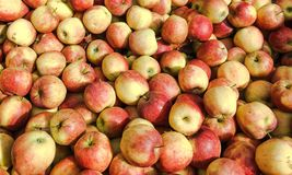 Fine ripe apples Stock Photos