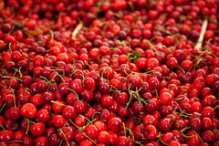 Fine ripe cherries Royalty Free Stock Photo
