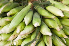 Fine ripe corncobs Royalty Free Stock Photography