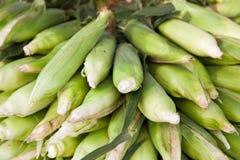 Fine ripe corncobs Royalty Free Stock Photography