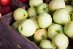 Fine ripe green apples Royalty Free Stock Images
