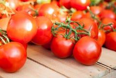 Fine ripe tomatoes Stock Photos