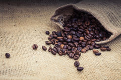 Fine roasted coffee beans Stock Image
