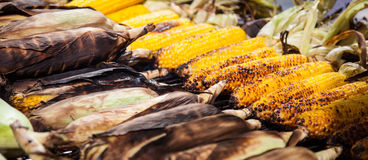 Fine roasted corncobs Royalty Free Stock Photos