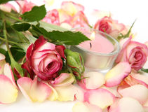 Fine rose and candle Stock Images