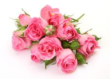 Fine roses Stock Photos