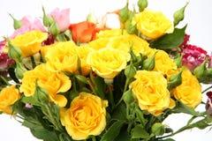 Fine roses Royalty Free Stock Photo