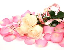 Fine roses and petals Stock Photo