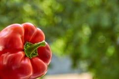 Fine rossa del peperone dolce su sul fondo vago di verde della natura con lo spazio della copia Vista laterale Fotografia Stock Libera da Diritti