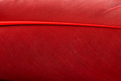 Fine rossa della piuma su Fotografia Stock Libera da Diritti