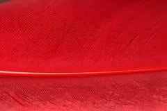 Fine rossa della piuma su Immagini Stock