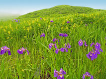 Fine rural summer meadow landscape Stock Photography