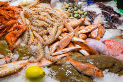 Fine seafood in the Boqueria Stock Images