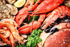 Fine selection of crustacean for dinner. Lobster, crab and jumbo. Shrimps and oysters on dark background stock photos