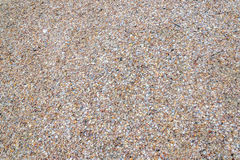 Fine shells texture finish. Shells texture used in wall floor and garden fill Royalty Free Stock Images