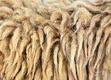 Fine sporca di struttura della lana della capra su fotografie stock libere da diritti