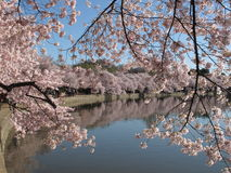 Fine Spring Day at the Tidal Basin Royalty Free Stock Image