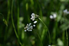 Fine spring flowers in garden Stock Photography