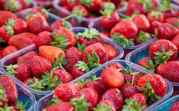 Fine strawberries Royalty Free Stock Photos