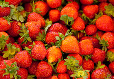 Fine strawberries Stock Image