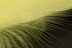 Fine strutturata gialla della piuma su Immagine Stock Libera da Diritti