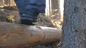 Fine su dei piedi maschii che camminano sopra il ceppo di legno che si trova nel giovane irriconoscibile dell'abetaia che spende  archivi video