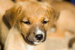 Chiuda su del cane del bambino Fotografia Stock