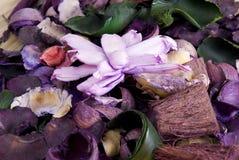 Chiuda su del pourri del vaso del colorfull Fotografia Stock Libera da Diritti