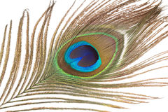 Chiuda su della piuma del pavone Fotografie Stock