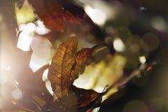 Fine su delle foglie tropicali con il chiarore del sole Fotografia Stock