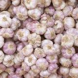 Fine su di molte teste di aglio porpora bianco sul supporto del mercato Fotografie Stock Libere da Diritti