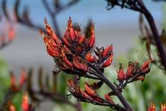 Fine su di un fiore arancio rosso prima che stia aprendosi Fotografia Stock