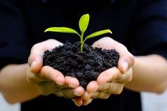 Fine su sulla tenuta umana di gesto di mano una piccola pianta crescente sul bl Immagini Stock