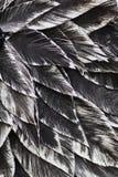 Fine in su Uccello nero decorativo illustrazione vettoriale