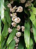 Fine sui bei fiori della pianta di cereale con le foglie verdi immagini stock
