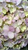 Fine sui fiori di fioritura fotografia stock