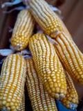 Fine sui semi secchi che appendono sul palo nero fotografie stock libere da diritti