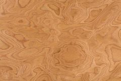 Fine sul fondo di legno di struttura del grano del burl reale della noce fotografia stock