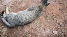 Fine sul gatto di sonno sulla terra stock footage