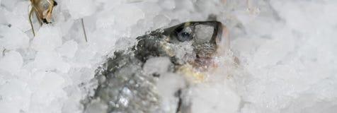 Fine sul pesce e su altri frutti di mare deliziosi in frigorifero d del ghiaccio immagine stock