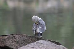 Fine sull'uccello del gabbiano di mare immagini stock
