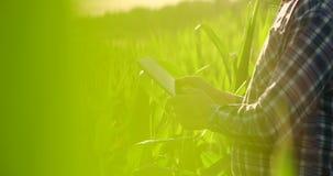 Fine sulla mano maschio che tocca una foglia Agricoltore senior che tiene un computer portatile in un campo di grano che prende c stock footage