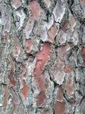 Fine sulle coperture della corteccia di albero a Orleans Francia immagini stock