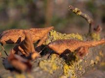 Fine sulle foglie gialle sul dettaglio di legno del muschio fotografie stock libere da diritti
