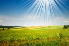 Fine Summer Landscape. Stock Image