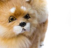 Fine sveglia del giocattolo del cane della bambola su, bello su fondo bianco fotografia stock libera da diritti