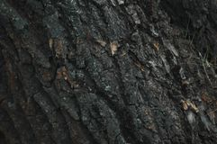 Fine bark texture background. Fine tree bark texture background the whole frame Stock Photo